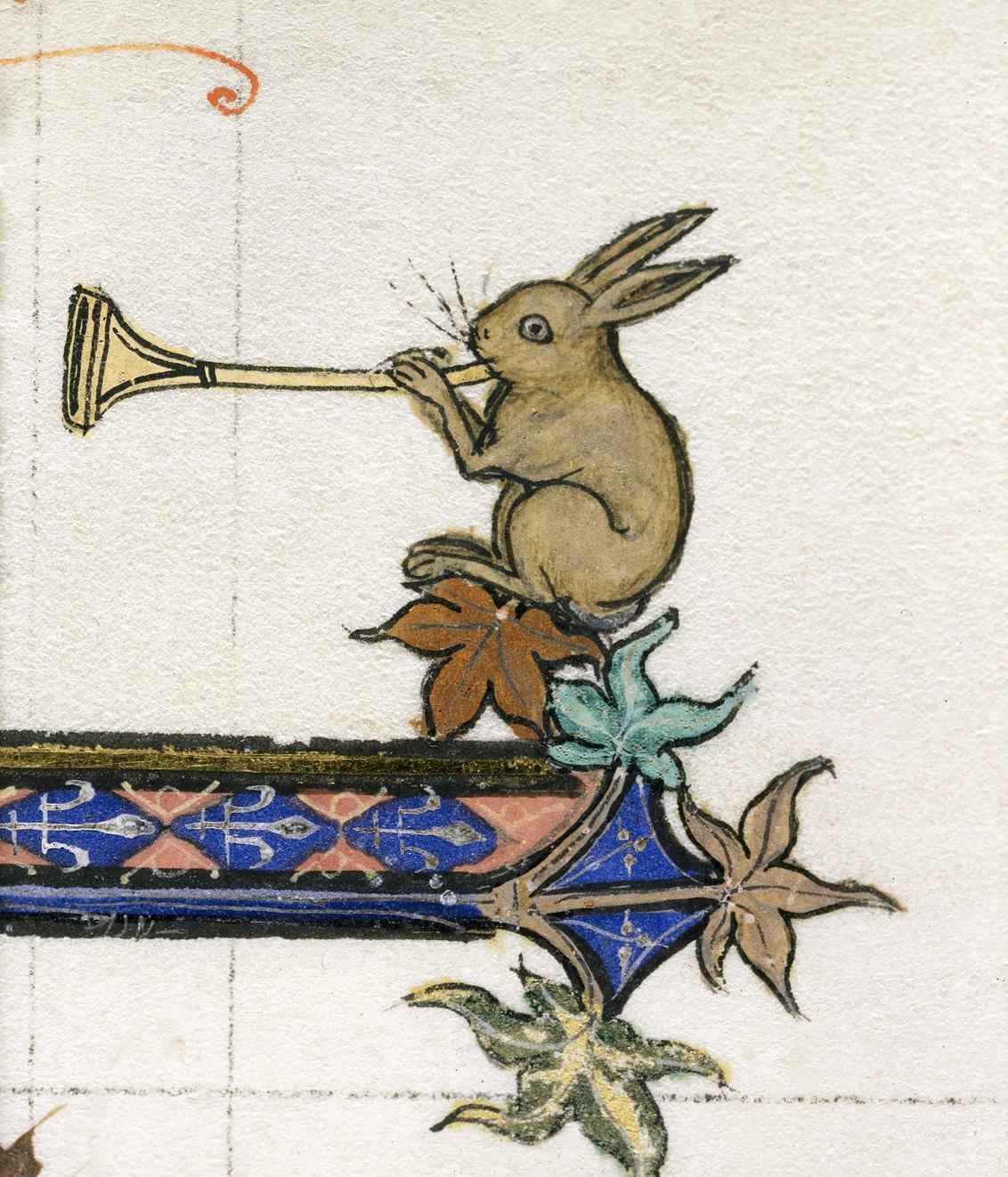 Assolo di coniglio