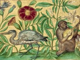 Scimmia che suona