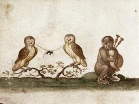 Scimmia, gufi, topo