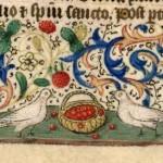 """PROVERBI MEDIEVALI: """"Per le colombe le ciliegie sono amare"""""""
