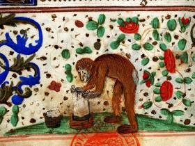 Scimmia che fa il bucato