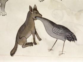 Volpe contro uccello