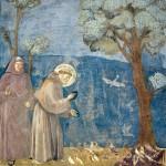 15 La predica agli uccelli