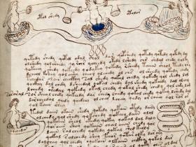 Immagine tratta dal manoscritto Voynich