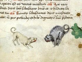 Cane contro gatto