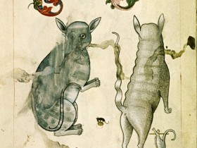CATURDAY FOLIA  OCCUPAZIONI FELINE df241e47fa