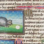 I gatti nel medioevo