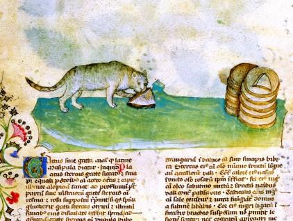 """Gatto, miniatura tratta dal codice """"Historia Plantarum"""""""
