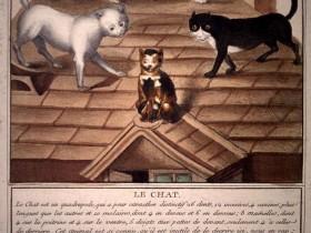 Gatti sul tetto