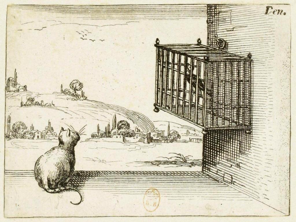 Gatto, cat, Folia Magazine