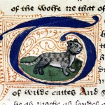 CATURDAY FOLIA: IL FEROCE GATTO SELVATICO