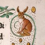 Coniglio St. Gallen, Stiftsbibliothek, Cod. Sang. 357