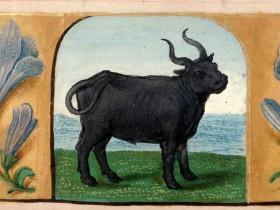 Libro d'Ore (Fiandre, 1510-1525), BM Rouen