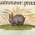 Libro d'Ore (Fiandre, 1510-1525), Rouen