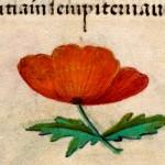 05 Libro d'Ore di Giovanna di Castiglia (Fiandre, 1486-1506), British Library, Londra