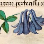 08 Libro d'Ore di Giovanna di Castiglia (Fiandre, 1486-1506), British Library, Londra