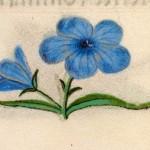 09 Libro d'Ore di Giovanna di Castiglia (Fiandre, 1486-1506), British Library, Londra