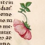 13 Libro d'Ore di Giovanna di Castiglia (Fiandre, 1486-1506), British Library, Londra