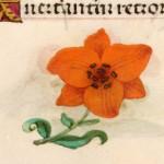 14 Libro d'Ore di Giovanna di Castiglia (Fiandre, 1486-1506), British Library, Londra