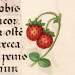15 Libro d'Ore di Giovanna di Castiglia (Fiandre, 1486-1506), British Library, Londra