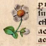 16 Libro d'Ore di Giovanna di Castiglia (Fiandre, 1486-1506), British Library, Londra