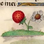 18 Libro d'Ore di Giovanna di Castiglia (Fiandre, 1486-1506), British Library, Londra