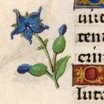 18 Libro d'Ore di Giovanna di Castiglia' (Fiandre, 1486-1506), British Library, Londra.