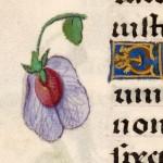 19 Libro d'Ore di Giovanna di Castiglia (Fiandre, 1486-1506), British Library, Londra