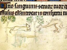 Gatto contro drago