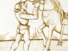 A caval donato...