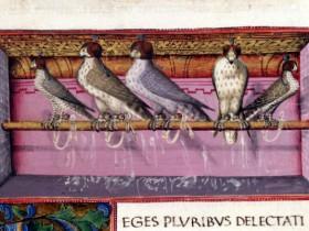 Trattato di falconeria (metà XV secolo), Beinecke Rare Book Library, Yale University