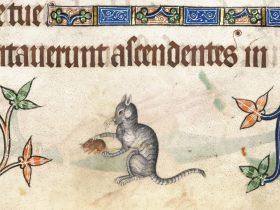 Gatto con topo